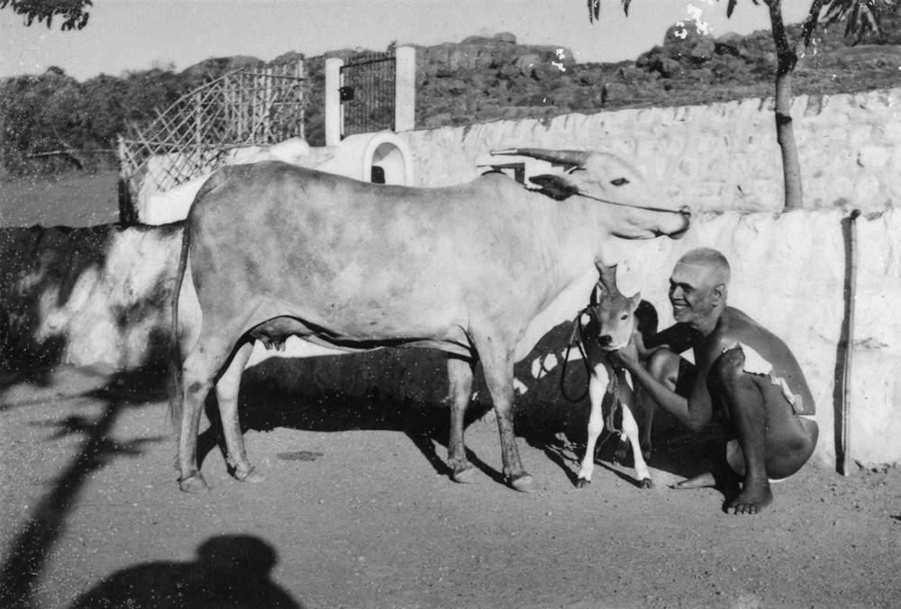 Bhagavam Lakshmi and a calf
