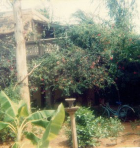 Osborne-Compound-1985
